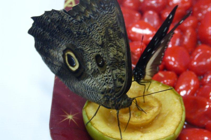 Посреди снежного Сыктывкара порхают бабочки (фото) - фото 2