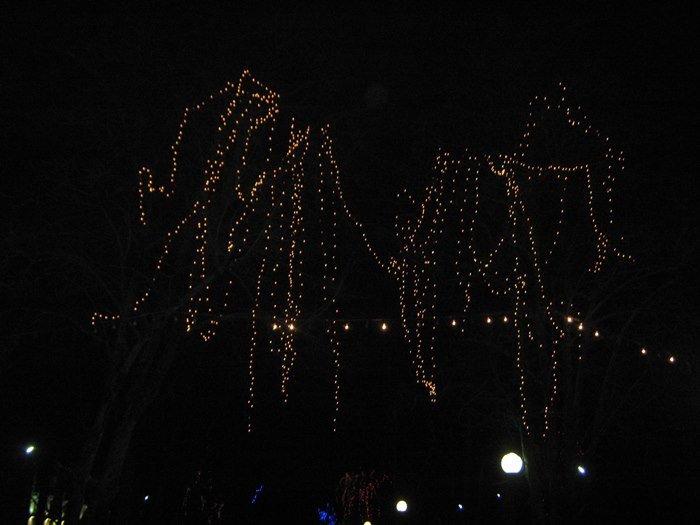 Как Полоцк готовится к Новому году: огни ночного города (фото) - фото 9