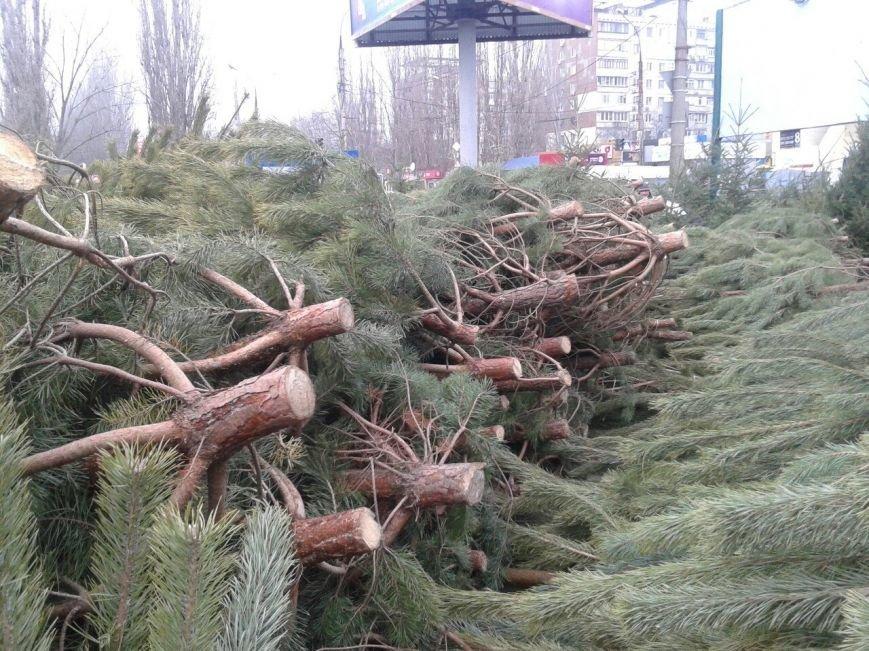 В Николаеве пресекли продажу браконьерских новогодних красавиц (ФОТО) (фото) - фото 2