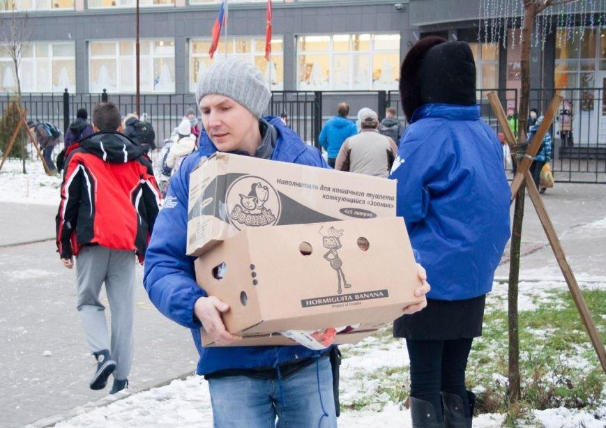 Волонтеры из Пушкина подружились с бездомными лисятами, фото-2