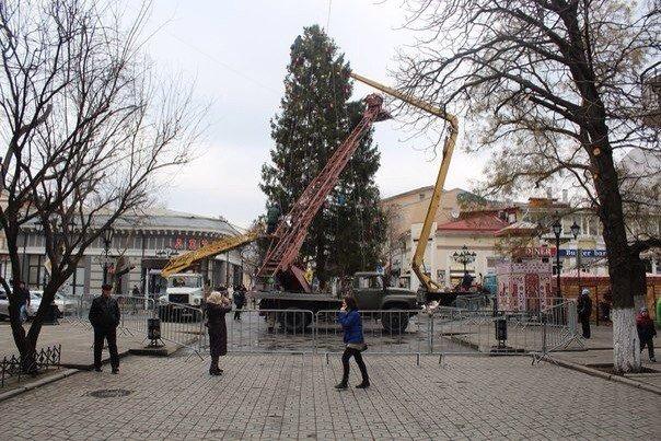 Сегодня в Симферополе всероссийский Дед Мороз откроет елку, прибывшую из Вологодской области (ФОТО) (фото) - фото 2