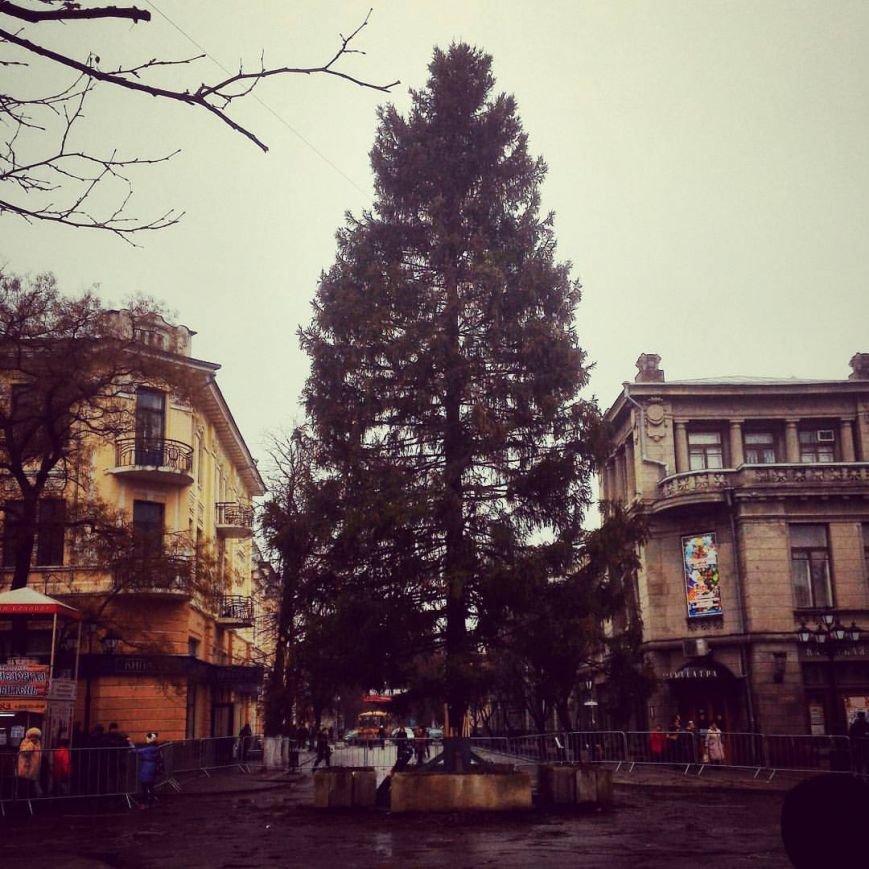 Сегодня в Симферополе всероссийский Дед Мороз откроет елку, прибывшую из Вологодской области (ФОТО) (фото) - фото 1