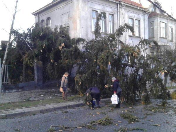 У Львові  дерево впало на тротуар та проїжджу частину (ФОТО) (фото) - фото 1