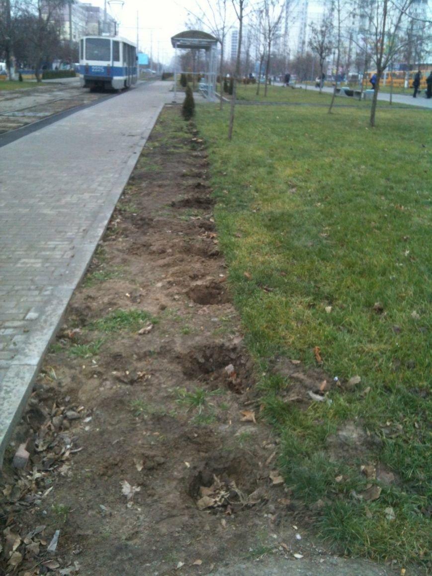 Беспредел: на пр. Мира в Днепропетровске неизвестные снова украли зеленые насаждения (ФОТО), фото-7
