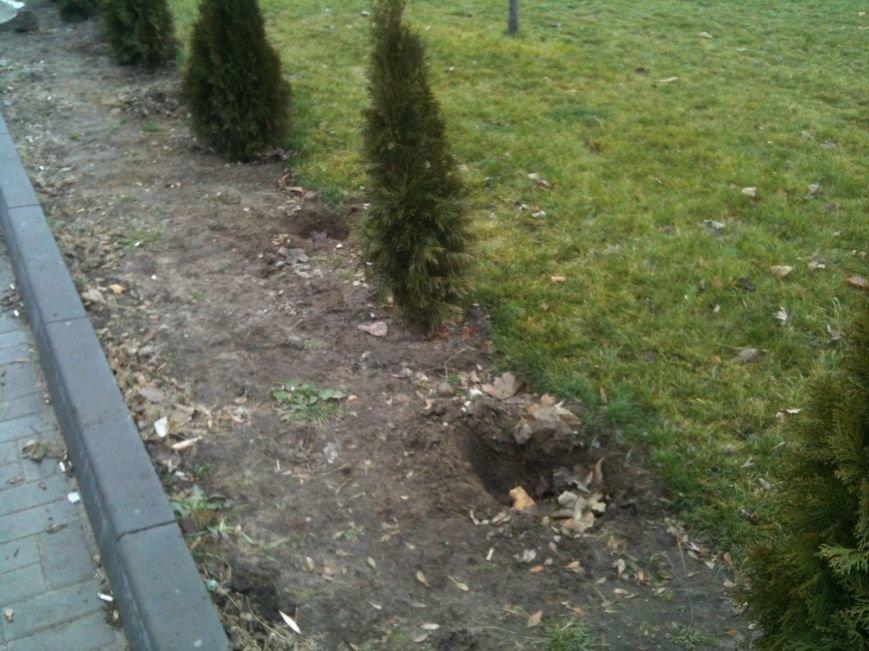 Беспредел: на пр. Мира в Днепропетровске неизвестные снова украли зеленые насаждения (ФОТО), фото-3