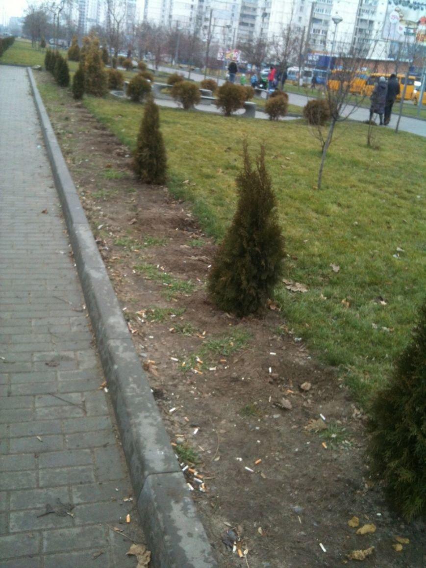 Беспредел: на пр. Мира в Днепропетровске неизвестные снова украли зеленые насаждения (ФОТО), фото-5