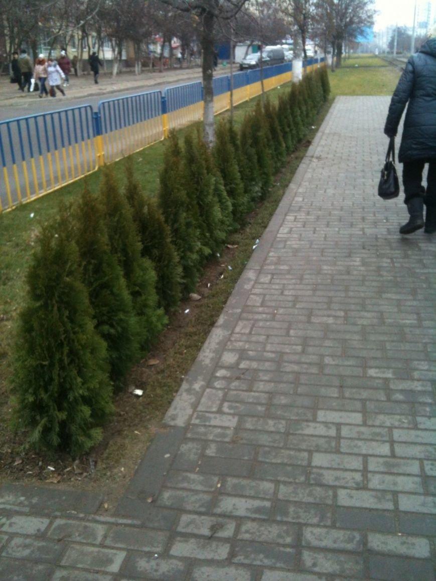 Беспредел: на пр. Мира в Днепропетровске неизвестные снова украли зеленые насаждения (ФОТО), фото-6