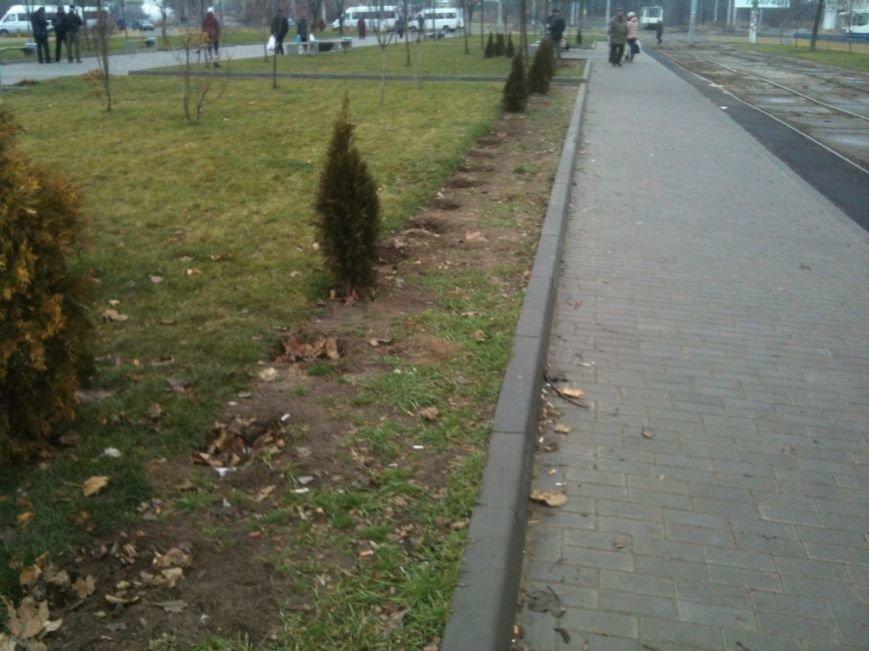 Беспредел: на пр. Мира в Днепропетровске неизвестные снова украли зеленые насаждения (ФОТО), фото-2