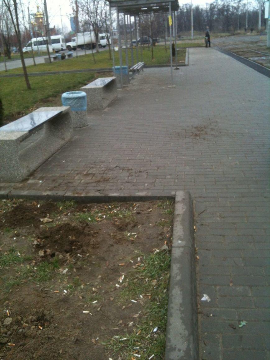 Беспредел: на пр. Мира в Днепропетровске неизвестные снова украли зеленые насаждения (ФОТО), фото-1