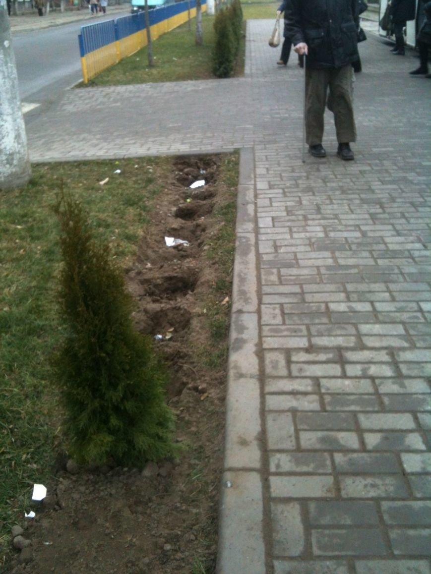 Беспредел: на пр. Мира в Днепропетровске неизвестные снова украли зеленые насаждения (ФОТО), фото-4