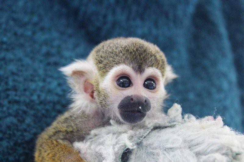 В Днепропетровске открылся «Трогательный зоопарк», фото-6