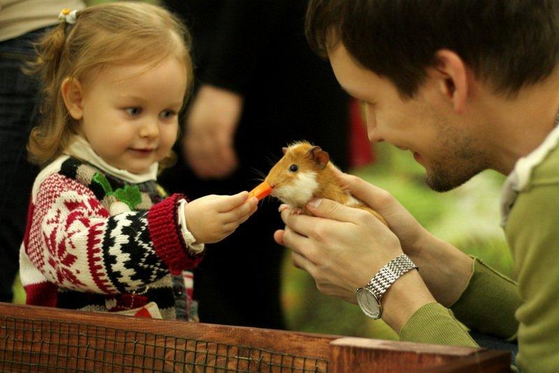 В Днепропетровске открылся «Трогательный зоопарк», фото-2