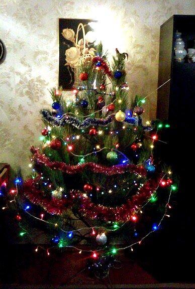А вы уже поставили елку? Фотопарад зеленых красавиц от макеевчан (фото) - фото 1