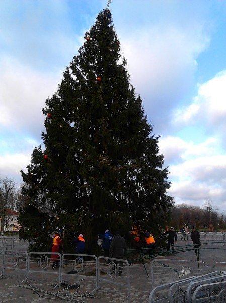 Главную елку Полоцка, упавшую из-за ветра, поставили на место (фото) - фото 1
