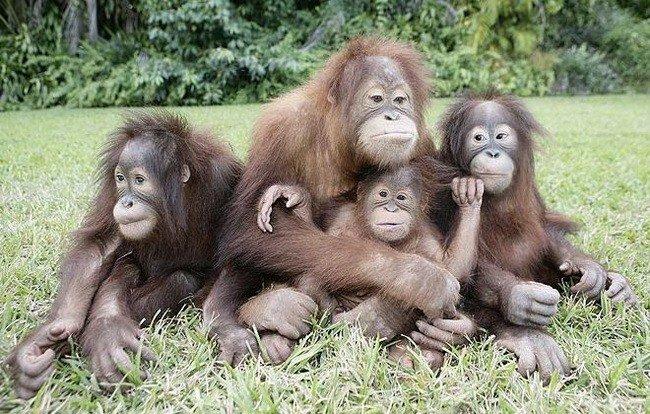Капуцины, макаки и орангутаны: сколько в Харькове обезьян и какие они (фото) - фото 3