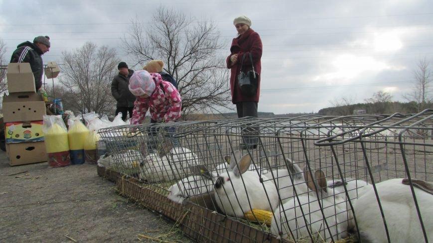 26 декабря в Северодонецке прошла выставка голубей (ФОТО), фото-3