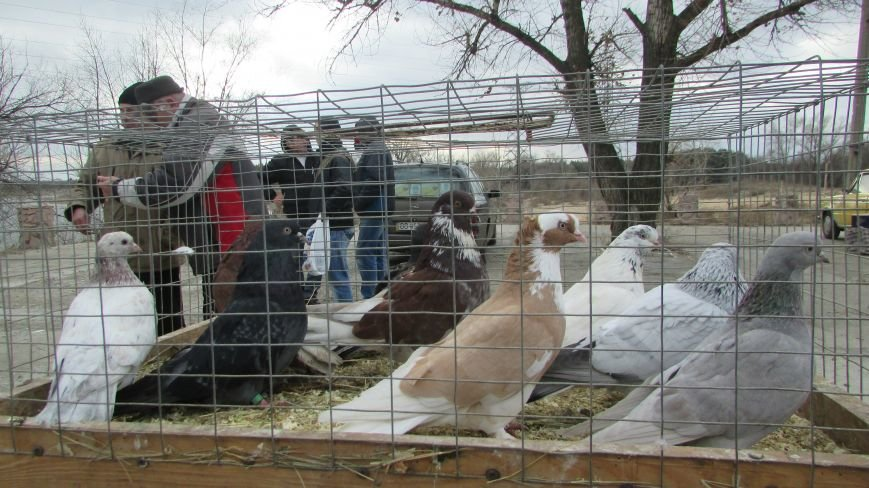 26 декабря в Северодонецке прошла выставка голубей (ФОТО), фото-1