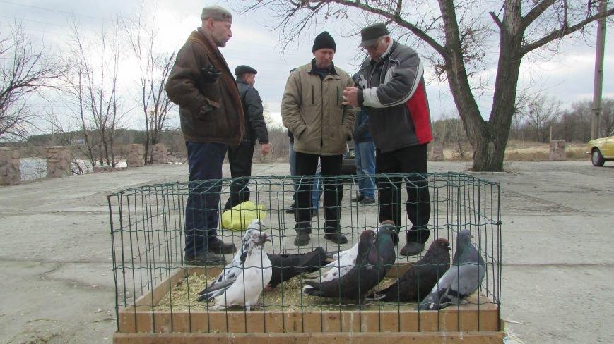 26 декабря в Северодонецке прошла выставка голубей (ФОТО), фото-2