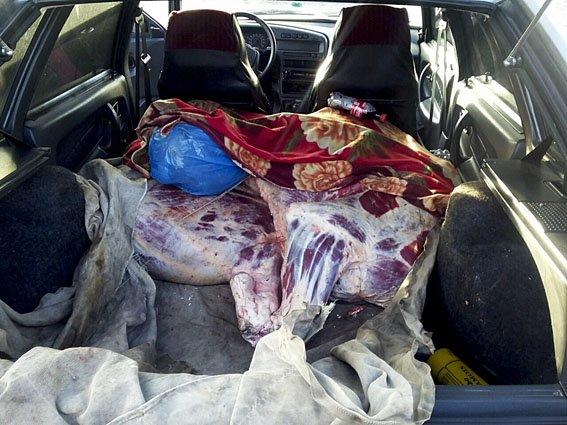 В районе Мариуполя задержана нелегальная телятина (ФОТО) (фото) - фото 1