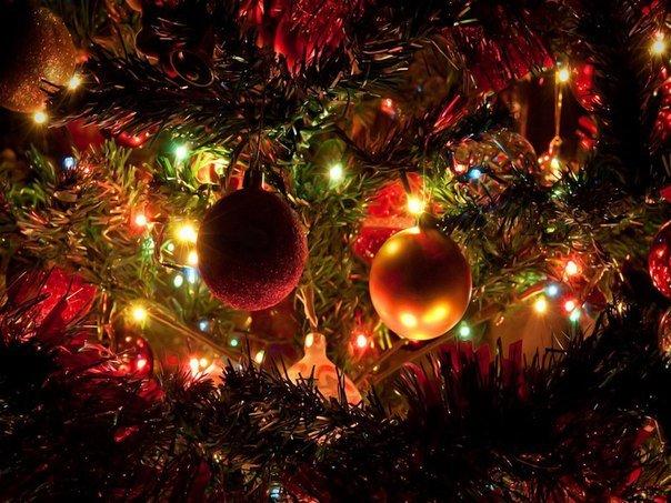 Мандарины, елка и очереди в магазинах: Без чего новополочане не представляют Новый год? (фото) - фото 6