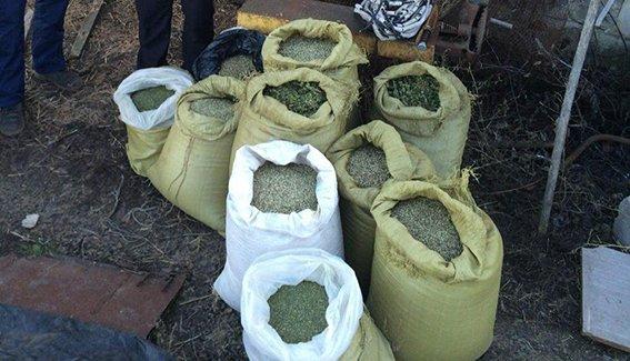 В Криничанском районе изъяли свыше 150 кг марихуаны (фото) - фото 3
