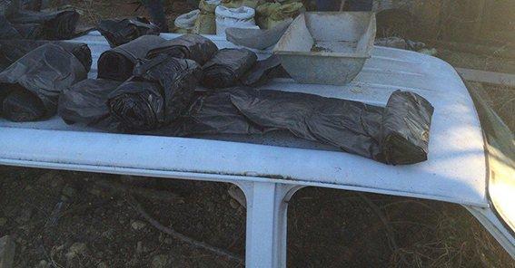 В Криничанском районе изъяли свыше 150 кг марихуаны (фото) - фото 2
