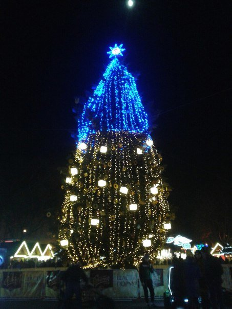 елка-патриот, Львов
