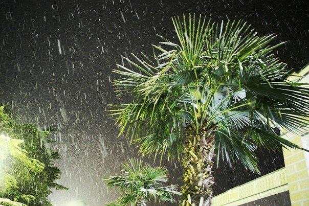 Пальмы в снегу: ялтинская зимняя сказка в разгаре (фото) - фото 1