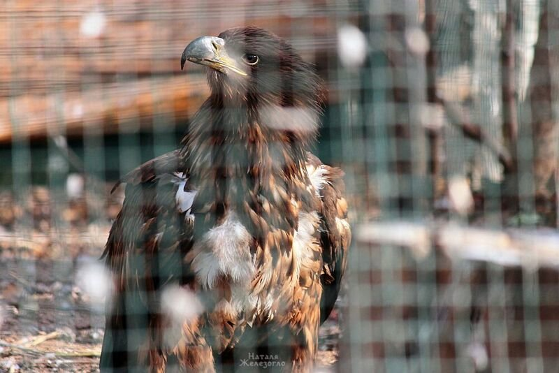 Отобранные в уличных фотографов орлы в Одесском зоопарке идут на поправку (ФОТО) (фото) - фото 1