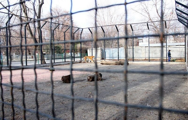 Непроданное мясо с одесских супермаркетов отдают тиграм (ФОТО) (фото) - фото 1