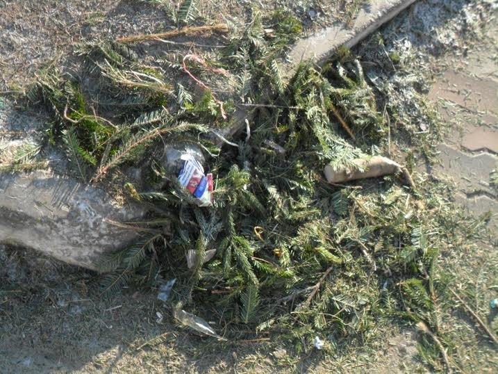 Продавці ялинок перетворили Привокзальну площу на смітник (ФОТО), фото-6