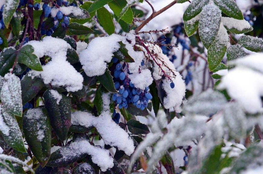 Полтаву скували морози (ФОТО) (фото) - фото 1