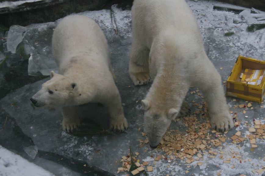 В Николаевском зоопарке отметили день рождения белого мишки Нанука (ФОТО) (фото) - фото 1