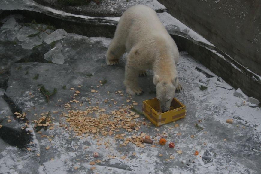 В Николаевском зоопарке отметили день рождения белого мишки Нанука (ФОТО) (фото) - фото 5