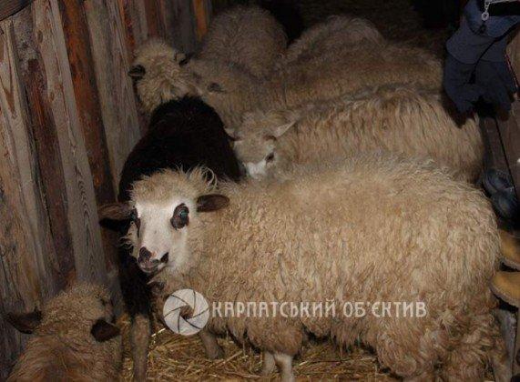 В Ужгороді вдруге пройшов живий вертеп (ФОТО) (фото) - фото 1