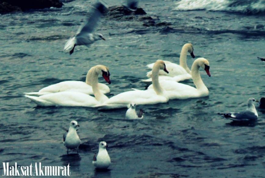 Зимовка в Актау (фото) - фото 1