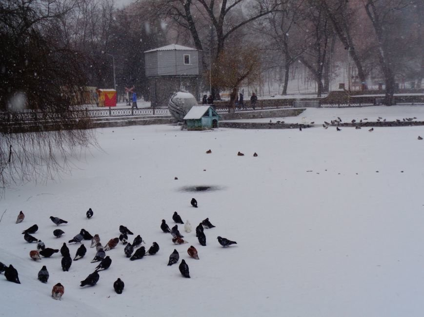 На Днепропетровщине с последствиями снегопада борются 260 снегоуборочных машин (ФОТО) (фото) - фото 1