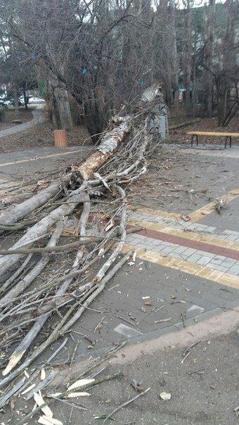 В Симферополе сухое дерево упало на женщину с коляской, - очевидцы (ФОТО) (фото) - фото 1