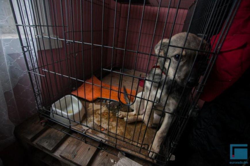 Как выживает в зимний период приют для собак на окраине Гродно (фоторепортаж) (фото) - фото 6