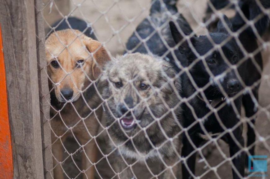 Как выживает в зимний период приют для собак на окраине Гродно (фоторепортаж) (фото) - фото 12
