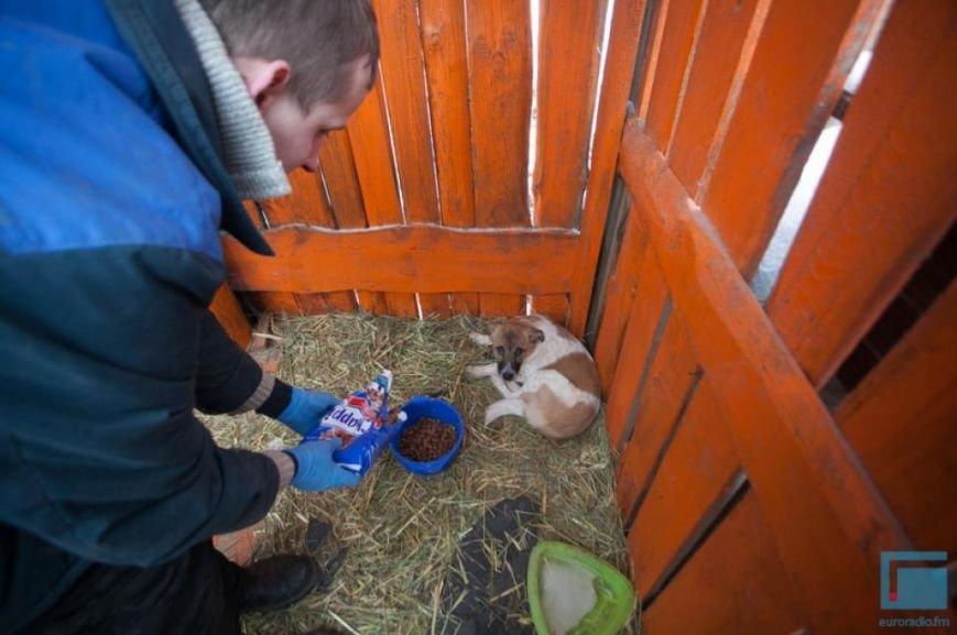 Как выживает в зимний период приют для собак на окраине Гродно (фоторепортаж) (фото) - фото 10