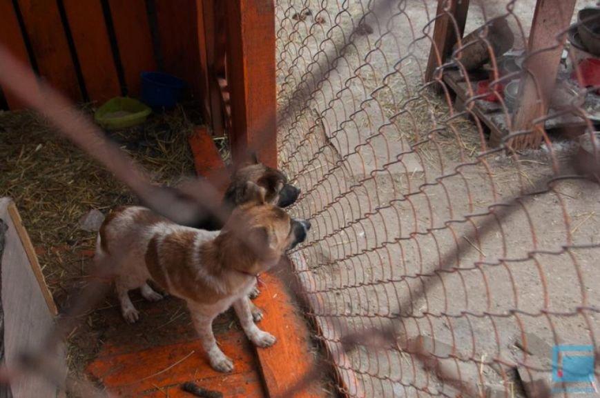 Как выживает в зимний период приют для собак на окраине Гродно (фоторепортаж) (фото) - фото 2