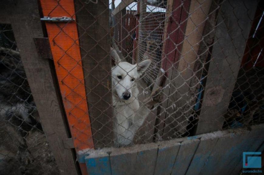 Как выживает в зимний период приют для собак на окраине Гродно (фоторепортаж) (фото) - фото 4