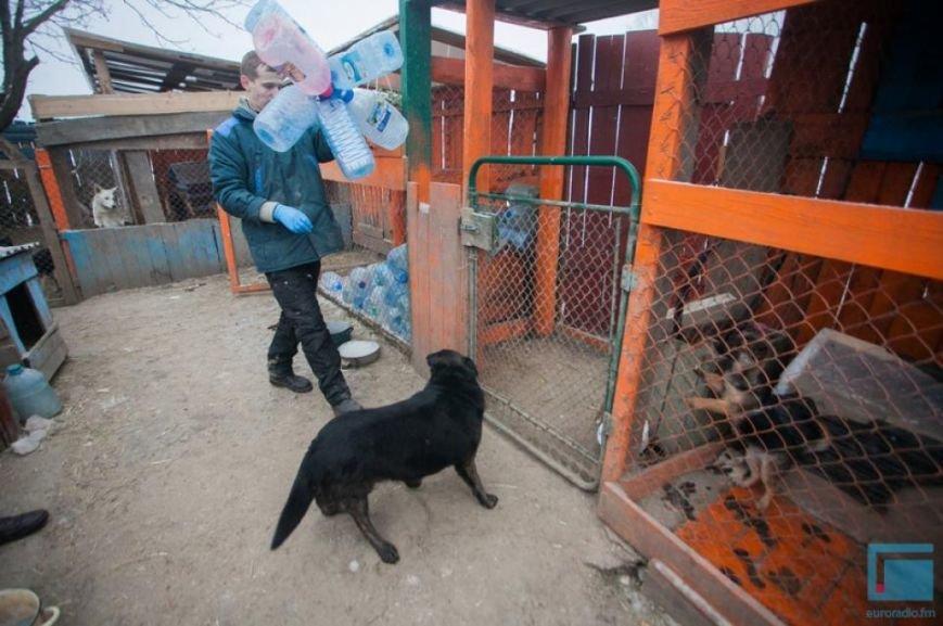 Как выживает в зимний период приют для собак на окраине Гродно (фоторепортаж) (фото) - фото 9