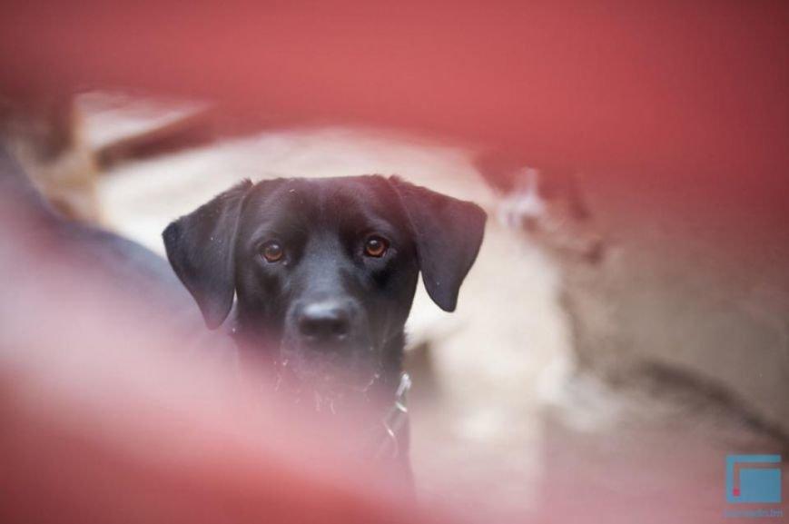Как выживает в зимний период приют для собак на окраине Гродно (фоторепортаж) (фото) - фото 13