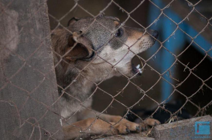 Как выживает в зимний период приют для собак на окраине Гродно (фоторепортаж) (фото) - фото 11