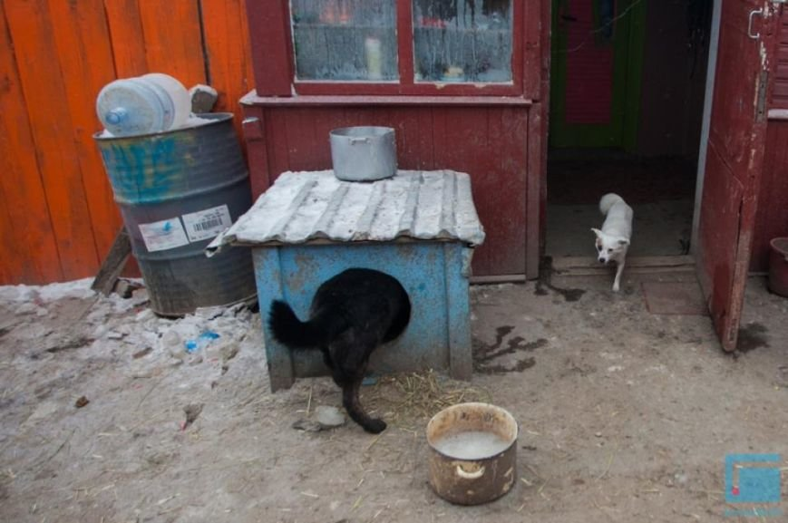 Как выживает в зимний период приют для собак на окраине Гродно (фоторепортаж) (фото) - фото 3