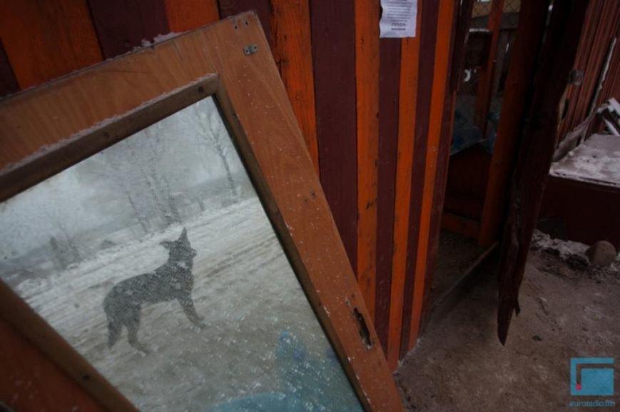 Как выживает в зимний период приют для собак на окраине Гродно (фоторепортаж) (фото) - фото 15