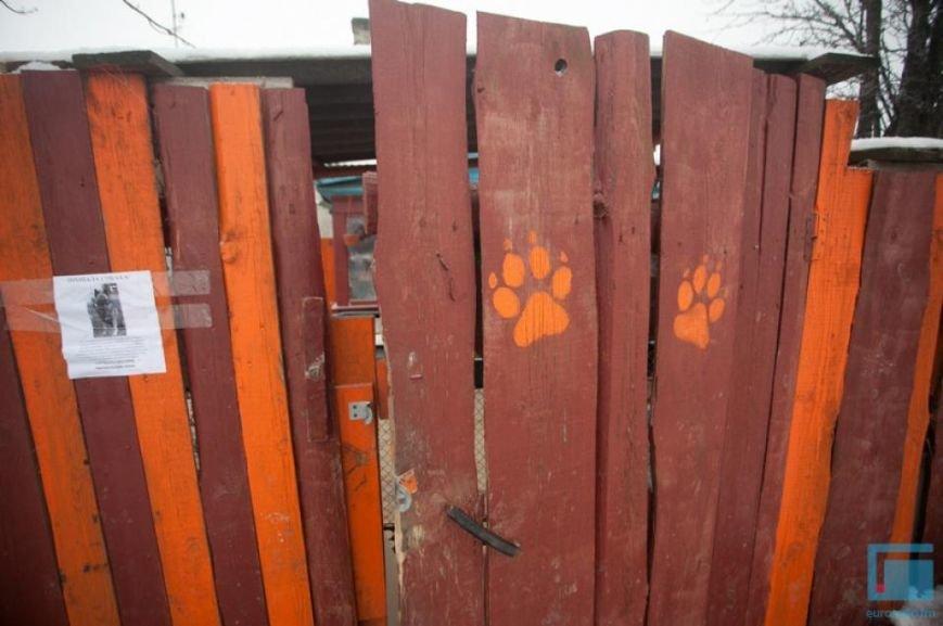 Как выживает в зимний период приют для собак на окраине Гродно (фоторепортаж) (фото) - фото 14