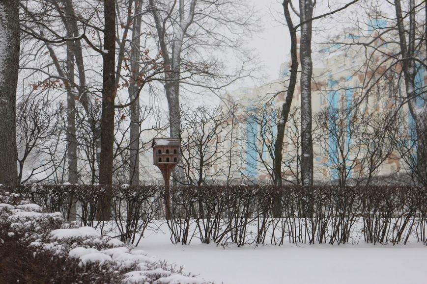 "Сотрудники музея ""Царское Село"" установили в городских парках 60 кормушек для птиц, фото-1"